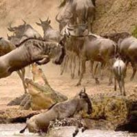Lake Nakuru - Masai Mara Budget Safari Tour