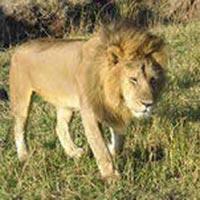 Amboseli - Nakuru - Masai Mara Wildlife Camping Tour