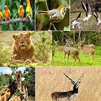Gujarat Wildlife Tour - I