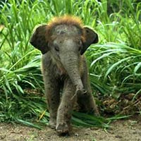 Rajaji National Park Tour Package