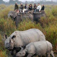 The One horned Rhino with Hoolock Gibbons Tour