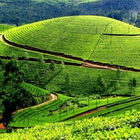 Munnar and Backwaters Tour