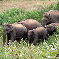 Dooars - Lataguri - Bindu - Madarihat Tour