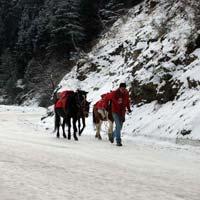 Amazing Himachal Tour
