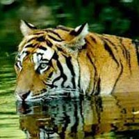 Nainital with Corbett Tour (Family Special)