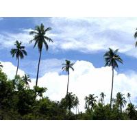Andaman & Nicobar Delight