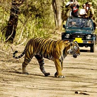 8 Days Golden Triangle tour with Ranthambore Tiger Safari