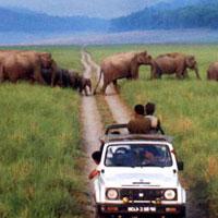 14 Days Wildlife Tour