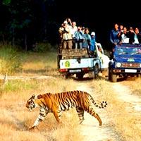 Tiger Trail Wildlife Tour