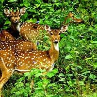Wildlife Sub Continental Tours