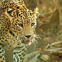 South India Wildlife Tours
