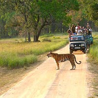 Wildlife Safari in India Central and south West Tour