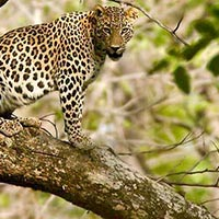 North East India Wildlife Tour Package