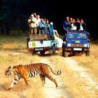Rajasthan Wildlife Tour1