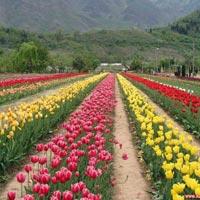 Manali - Ladakh - Kashmir Tour