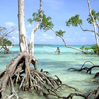 Trip to Explore for 6 days in Andaman