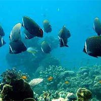 Best Andaman Honeymoon Tour Package