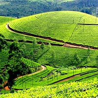 Gods Own Country - Kerala Tour