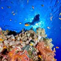 Andaman Honeymoon Ship Tour