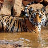Jaipur - Ranthambore