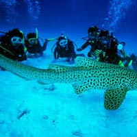 Andaman Tour and Holiday Packages