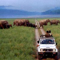 Corbett National Park Tour