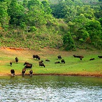 Periyar National Park Tour