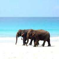 Port Blair - Havlock - Port Blair Tour