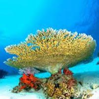 Green Andaman Tour