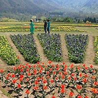 Tulip Garden: Asia's biggest garden