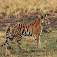 Bandhavgarh Safari Tour