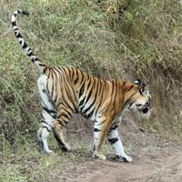 Nagzira Tiger Reserve Tour