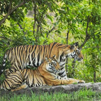 Satpura Tiger Reserve Tour