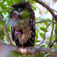 Bharatpur Birding Tour