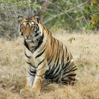 Tadoba Tiger Reserve Tour