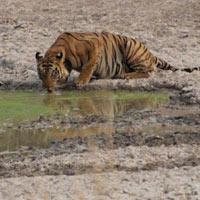 Sariska Tiger Reserve Tour