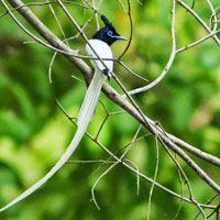 Khijadiya Birding Tour