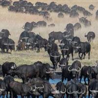 Linkwasha Camp - Safari Zimbabwe Tour