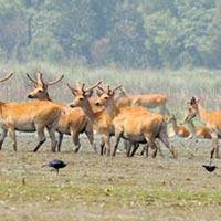 Agra to Dudhwa National Park Tour