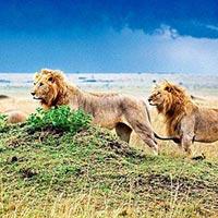 Agra - Lion Safari Tour