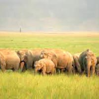 Agra - Jim Corbett Tour