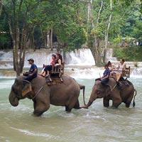elephant tour