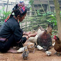 Phongsaly minority tour