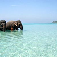 Wandoor Beach in Andaman Tour Package