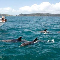 Enjoy Holidays in Andaman Tour Package