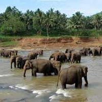 Elephant Orphanage  in Pinnawala