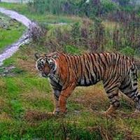 Guwahati - Kaziranga Wild Life Sanctuary Tour