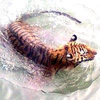Sundarban World Heritage Package