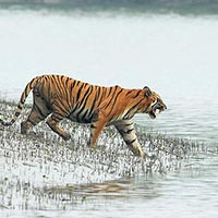 Sundarban Nature Package Tour
