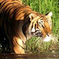 Sundarban National Park Tour